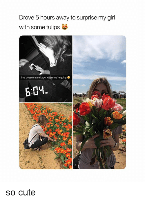 Cute, Girl, and Girl Memes: Drove 5 hours away to surprise my girl  with some tulips  She doesn't even know where we're going  6:0H so cute