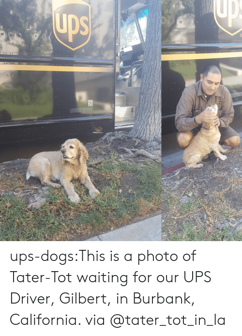 Dogs, Instagram, and Target: DS  0  DO  20  USDO ups-dogs:This is a photo of Tater-Tot waiting for our UPS Driver, Gilbert, in Burbank, California. via @tater_tot_in_la