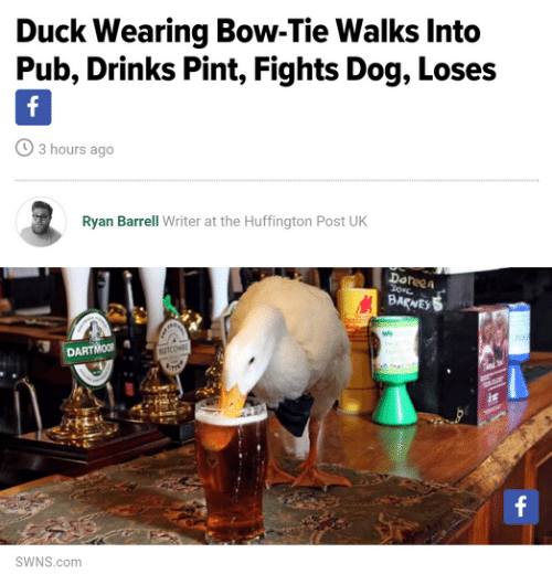 Duck, Huffington, and Huffington Post: Duck Wearing Bow-Tie Walks Into  Pub, Drinks Pint, Fights Dog, Loses  3 hours ago  Ryan Barrell Writer at the Huffington Post UK  Doteea  BARNE  DARTMOOR  SWNS.com