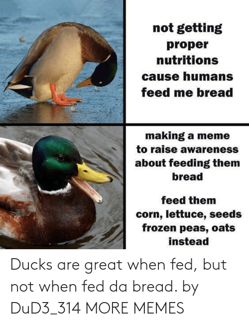 Dank, Memes, and Target: Ducks are great when fed, but not when fed da bread. by DuD3_314 MORE MEMES