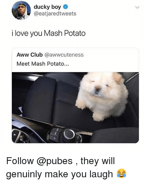Aww, Club, and Funny: ducky boy  @eatjaredtweets  i love you Mash Potato  Aww Club @awwcuteness  Meet Mash Potato... Follow @pubes , they will genuinly make you laugh 😂
