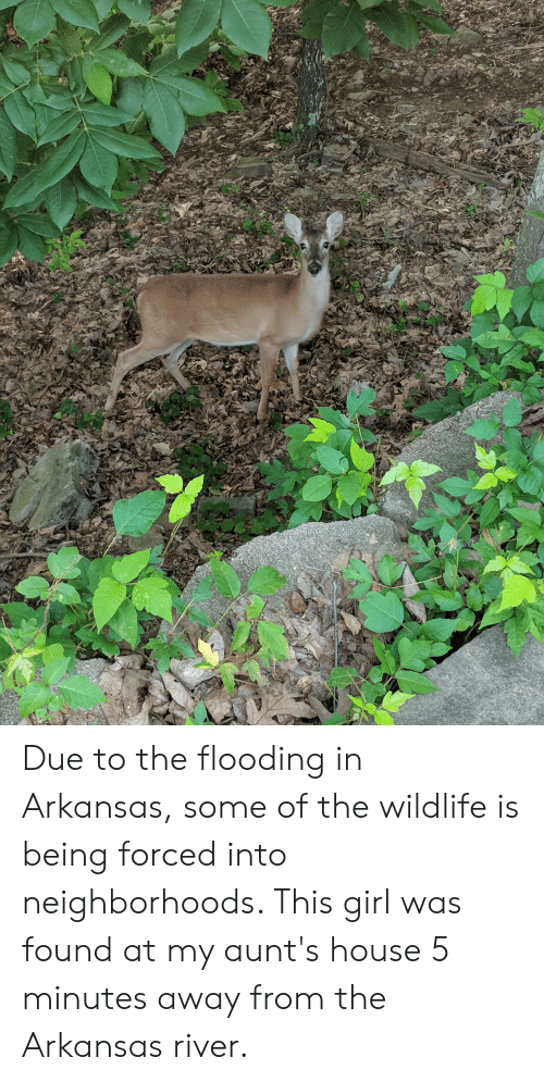 5 Minutes Away: Due to the flooding in Arkansas, some of the wildlife is being forced into neighborhoods. This girl was found at my aunt's house 5 minutes away from the Arkansas river.
