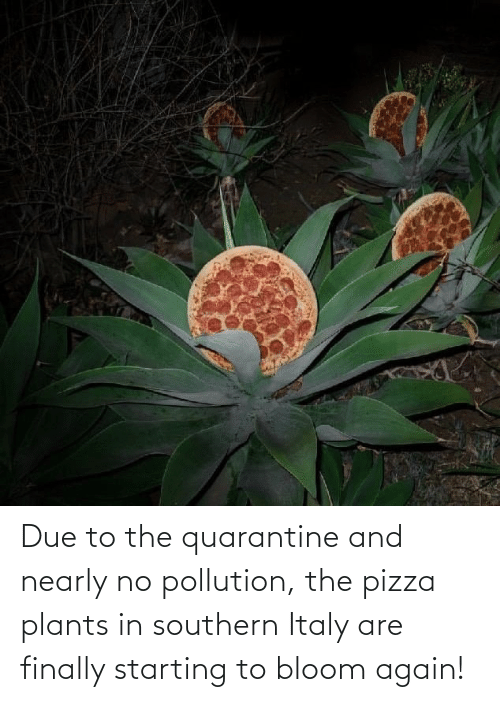 Due To: Due to the quarantine and nearly no pollution, the pizza plants in southern Italy are finally starting to bloom again!