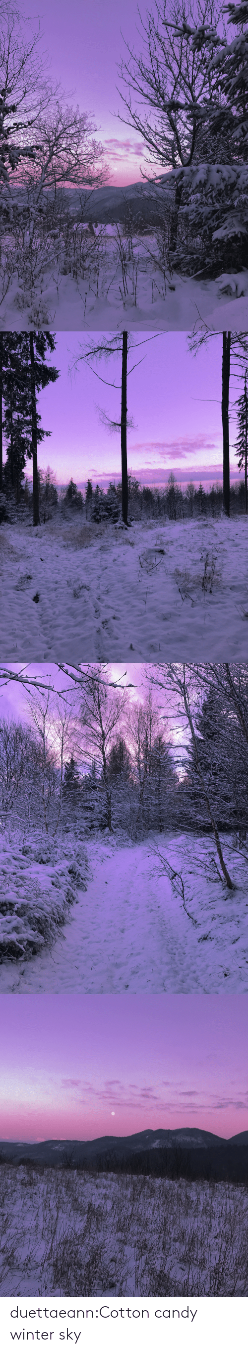 Winter: duettaeann:Cotton candy winter sky