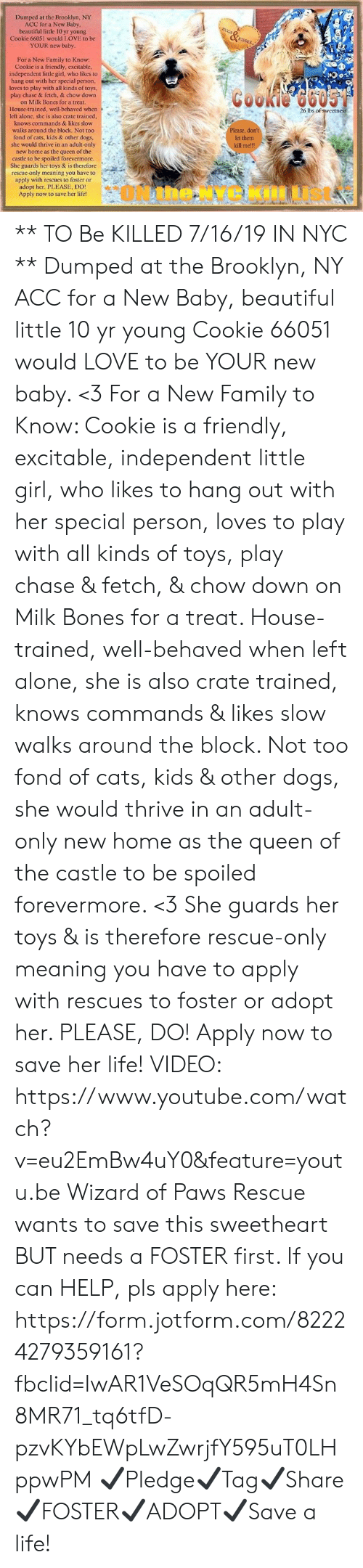Being Alone, Beautiful, and Bones: Dumped at the Brooklyn, NY  ACC for a New Baby,  beautiful little 10 yr young  Cookie 66051 would LOVE to be  YOUR new baby  HUGS  &  KISSES  For a New Family to Know  Cookie is a friendly, excitable,  independent little girl, who likes to  hang out with her special person,  loves to play with all kinds of toys,  play chase & fetch, & chow down  Cookie 6605  on Milk Bones for a treat.  26 lbs of swcctness  House-trained, well-behaved when  left alone, she is also crate trained,  knows commands & likes slow  Please, don't  let them  kill me!!!  walks around the block. Not too  fond of cats, kids & other dogs,  she would thrive in an adult-only  new home as the queen of the  castle to be spoiled forevermore.  She guards her toys & is therefore  rescue-only meaning you have to  apply with rescues to foster or  adopt her. PLEASE, DO!  Apply now to save her life! ** TO Be KILLED 7/16/19 IN NYC **  Dumped at the Brooklyn, NY ACC for a New Baby, beautiful little 10 yr young Cookie 66051 would LOVE to be YOUR new baby. <3 For a New Family to Know: Cookie is a friendly, excitable, independent little girl, who likes to hang out with her special person, loves to play with all kinds of toys, play chase & fetch, & chow down on Milk Bones for a treat. House-trained, well-behaved when left alone, she is also crate trained, knows commands & likes slow walks around the block. Not too fond of cats, kids & other dogs, she would thrive in an adult-only new home as the queen of the castle to be spoiled forevermore. <3 She guards her toys & is therefore rescue-only meaning you have to apply with rescues to foster or adopt her. PLEASE, DO! Apply now to save her life!   VIDEO: https://www.youtube.com/watch?v=eu2EmBw4uY0&feature=youtu.be  Wizard of Paws Rescue wants to save this sweetheart BUT needs a FOSTER first. If you can HELP, pls apply here:  https://form.jotform.com/82224279359161?fbclid=IwAR1VeSOqQR5mH4Sn8MR71_tq6tfD-pzvKYbEWpLwZwrjfY595uT0LHppwPM 