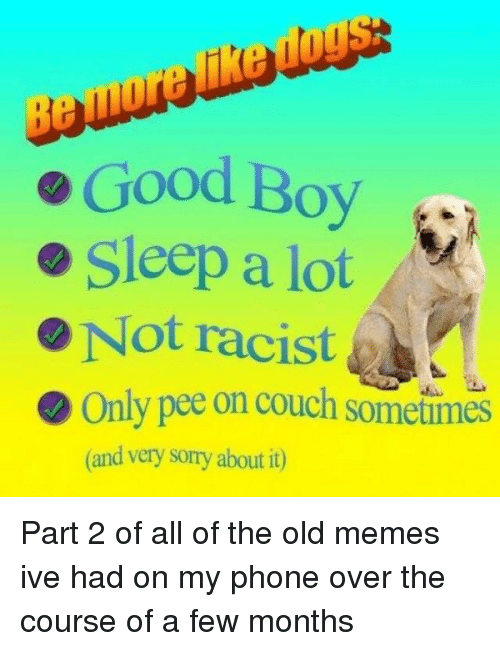 Memes, Phone, and Sorry: e Good Boy  Sleep a lot  e Not racist  Only pee on couch sometimes  (and very sorry about it) Part 2 of all of the old memes ive had on my phone over the course of a few months