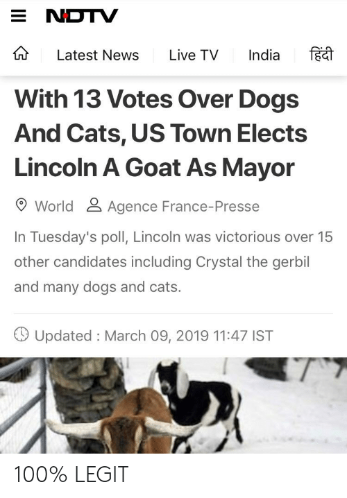 Anaconda, Cats, and Dogs: E NDTV  Latest News Live TV India f  With 13 Votes Over Dogs  And Cats, US Town Elects  Lincoln A Goat As Mayor  World& Agence France-Presse  In Tuesday's poll, Lincoln was victorious over 15  other candidates including Crystal the gerbil  and many dogs and cats.  Updated : March 09, 2019 11:47 IST 100% LEGIT