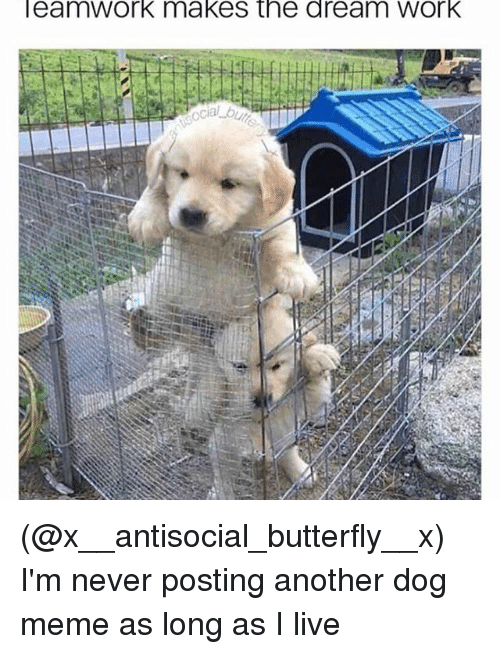 Meme, Work, and Butterfly: eamWork makes the dream Work (@x__antisocial_butterfly__x) I'm never posting another dog meme as long as I live