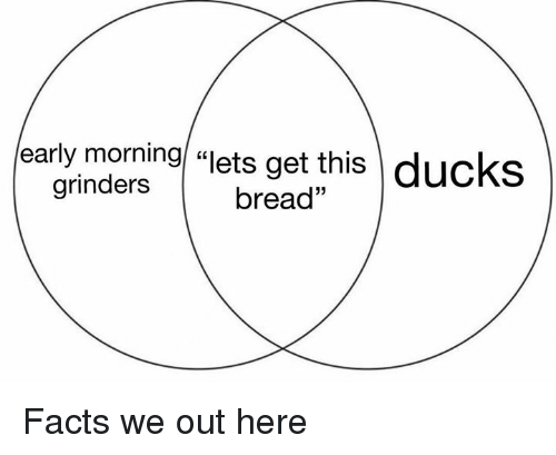 """Facts, Ducks, and Dank Memes: early morning """"ets get this  ducks  grinders  bread"""" Facts we out here"""