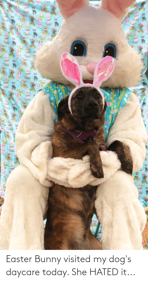 Visited: Easter Bunny visited my dog's daycare today. She HATED it...