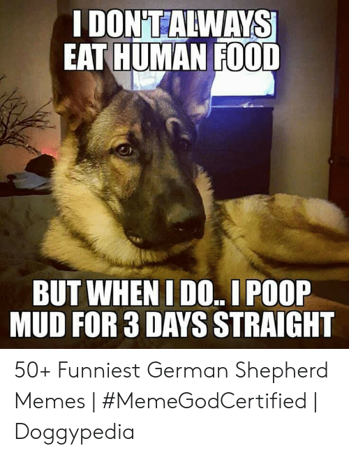 Food, Memes, and Poop: EAT HUMAN FOOD  BUT WHEN I DO.. I POOP  MUD FOR 3 DAYS STRAIGHT 50+ Funniest German Shepherd Memes | #MemeGodCertified | Doggypedia