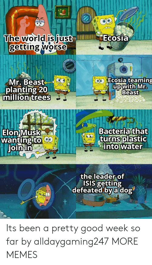 Dank, Isis, and Memes: Ecosia  The world is just  getting worse  Ecosia teaming  Mr. Beast  planting 20  million trees  up with Mr.  Beast  Bacteria that  turns plastic  into water  Elon Musk  wanting to  join in  the leader of  ISIS getting  defeated by a dog Its been a pretty good week so far by alldaygaming247 MORE MEMES