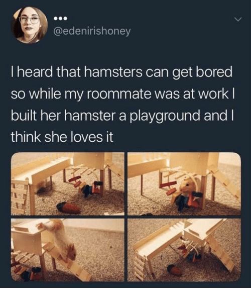 Bored, Roommate, and Work: @edenirishoney  I heard that hamsters can get bored  so while my roommate was at work l  built her hamster a playground and l  think she loves it