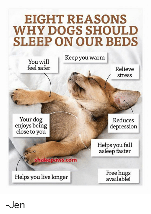 free hug: EIGHT REASONS  WHY DOGS SHOULD  SLEEP ON OUR BEDS  Keep you warm  You will  feel safer  Relieve  Stress  Your dog  Reduces  enjoys being  depression  close to you  Helps you fall  asleep faster  Shake paws com  Free hugs  Helps you live longer  available! -Jen