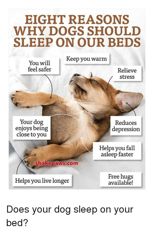 free hug: EIGHT REASONS  WHY DOGS SHOULD  SLEEP ON OUR BEDS  Keep you warm  You will  feel safer  Relieve  stress  Your dog  Reduces  enjoys being  depression  close to you  Helps you fall  asleep faster  Shake paws com  Free hugs  Helps you live longer  available! Does your dog sleep on your bed?