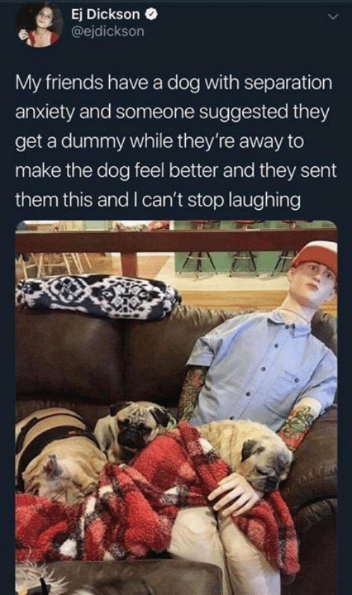 Friends, Memes, and Anxiety: Ej Dickson  @ejdickson  My friends have a dog with separation  anxiety and someone suggested they  get a dummy while they're away to  make the dog feel better and they sent  them this and I can't stop laughing