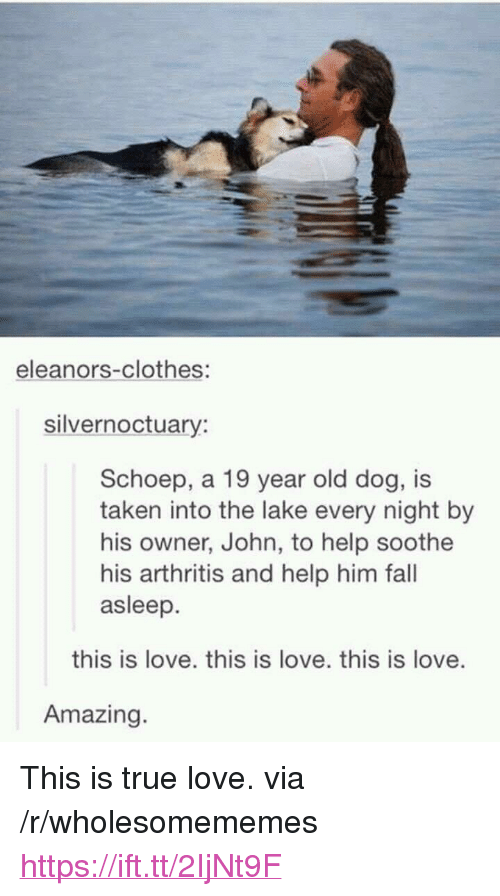 "Clothes, Fall, and Love: eleanors-clothes:  silvernoctuary:  Schoep, a 19 year old dog, is  taken into the lake every night by  his owner, John, to help soothe  his arthritis and help him fall  asleep.  this is love. this is love. this is love.  Amazing <p>This is true love. via /r/wholesomememes <a href=""https://ift.tt/2IjNt9F"">https://ift.tt/2IjNt9F</a></p>"