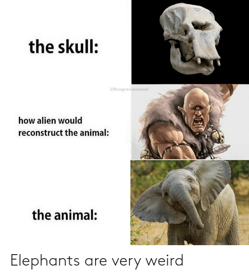Very: Elephants are very weird