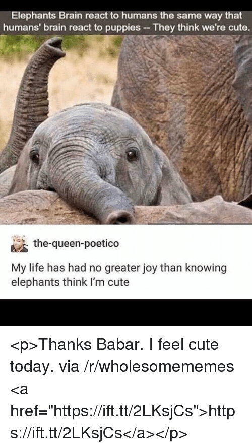 """Cute, Life, and Puppies: Elephants Brain react to humans the same way that  humans' brain react to puppies They think we're cute.  the-queen-poetico  My life has had no greater joy than knowing  elephants think I'm cute <p>Thanks Babar. I feel cute today. via /r/wholesomememes <a href=""""https://ift.tt/2LKsjCs"""">https://ift.tt/2LKsjCs</a></p>"""