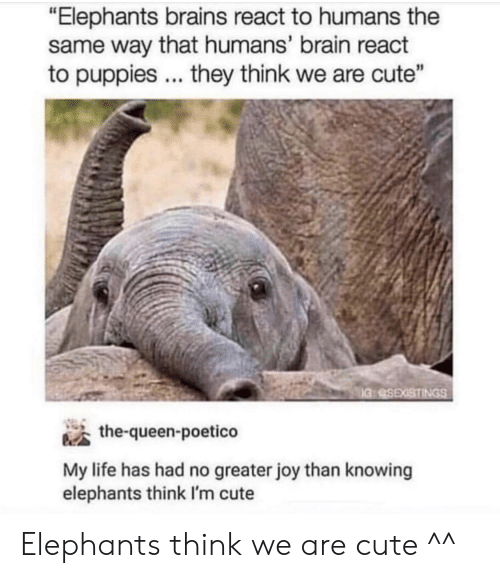 """Brains, Cute, and Life: """"Elephants brains react to humans the  same way that humans' brain react  to puppies they think we are cute""""  the-queen-poetico  My life has had no greater joy than knowing  elephants think I'm cute Elephants think we are cute ^^"""