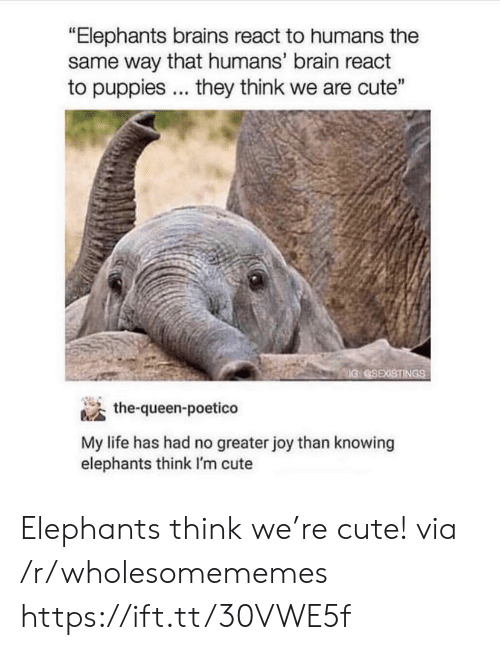 "Brains, Cute, and Life: ""Elephants brains react to humans the  same way that humans' brain react  to puppies... they think we are cute""  IG SEXISTINGS  the-queen-poetico  My life has had no greater joy than knowing  elephants think I'm cute Elephants think we're cute! via /r/wholesomememes https://ift.tt/30VWE5f"