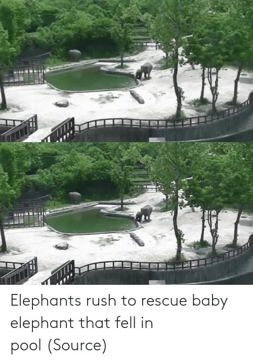 Baby: Elephants rush to rescue baby elephant that fell in pool(Source)