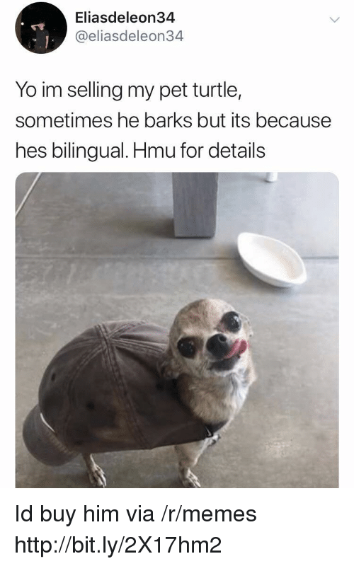 Memes, Yo, and Http: Eliasdeleon34  @eliasdeleon34  Yo im selling my pet turtle,  sometimes he barks but its because  hes bilingual. Hmu for details Id buy him via /r/memes http://bit.ly/2X17hm2