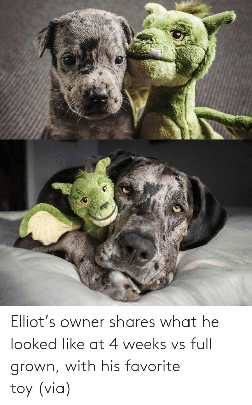 toy: Elliot's owner shares what he looked like at 4 weeks vs full grown, with his favorite toy (via)