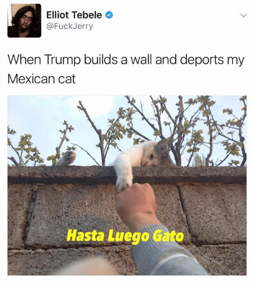 mexican cat: Elliot Tebele  @Fuck Jerry  When Trump builds a wall and deports my  Mexican cat  Hasta Luego Gato