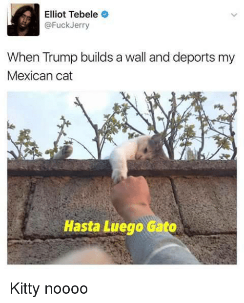mexican cat: Elliot Tebele  @FuckJerry  When Trump builds a wall and deports my  Mexican cat  Hasta Luego Gato <p>Kitty noooo</p>