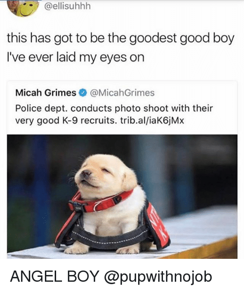 Police, Angel, and Good: @ellisuhhh  this has got to be the goodest good boy  I've ever laid my eyes on  Micah Grimes @MicahGrimes  Police dept. conducts photo shoot with their  very good K-9 recruits. trib.al/iaK6jMx ANGEL BOY @pupwithnojob