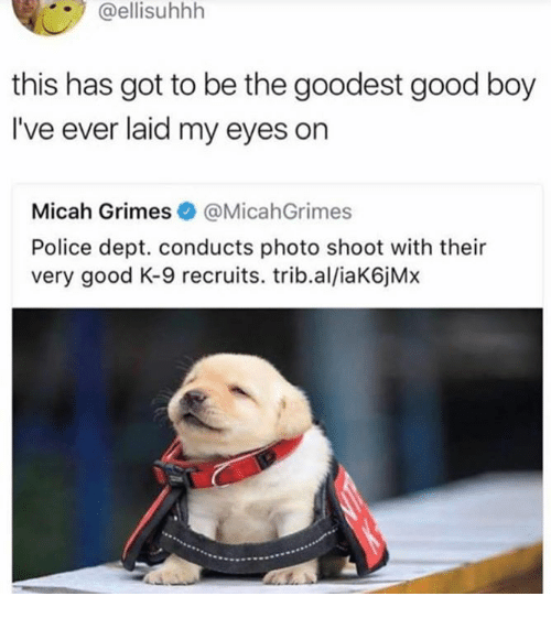 Police, Good, and Humans of Tumblr: @ellisuhhh  this has got to be the goodest good boy  I've ever laid my eyes on  Micah Grimes@MicahGrimes  Police dept. conducts photo shoot with their  very good K-9 recruits. trib.al/iaK6jMx