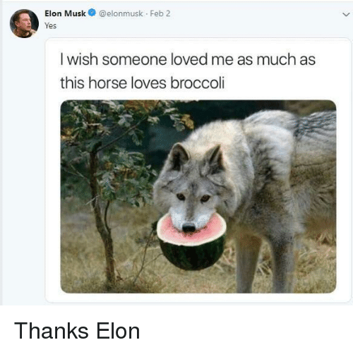broccoli: Elon Musk@elonmusk Feb 2  res  I wish someone loved me as much as  this horse loves broccoli Thanks Elon