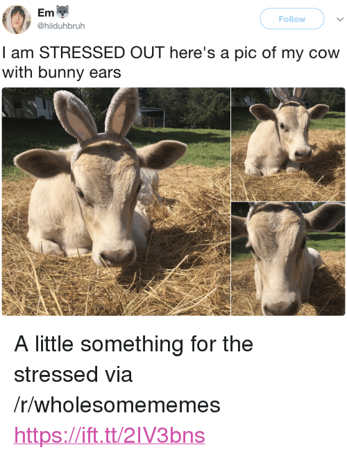 """Cow, Bunny, and Via: Em  @hilduhbruh  Follow  I am STRESSED OUT here's a pic of my cow  with bunny ears <p>A little something for the stressed via /r/wholesomememes <a href=""""https://ift.tt/2IV3bns"""">https://ift.tt/2IV3bns</a></p>"""