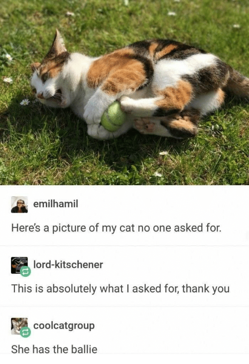 Thank You, A Picture, and Cat: emilhamil  Here's a picture of my cat no one asked for.  lord-kitschener  This is absolutely what I asked for, thank you  coolcatgroup  She has the ballie