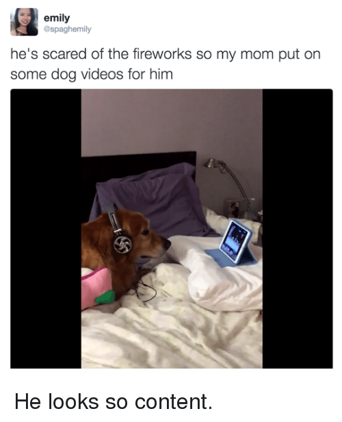 Memes, Videos, and Fireworks: emily  @spaghemily  he's scared of the fireworks so my mom put on  some dog videos for hinm He looks so content.