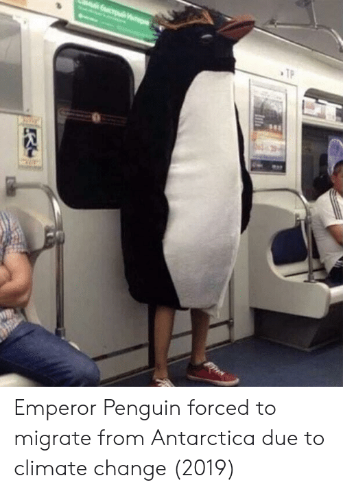 Penguin, Antarctica, and Change: Emperor Penguin forced to migrate from Antarctica due to climate change (2019)