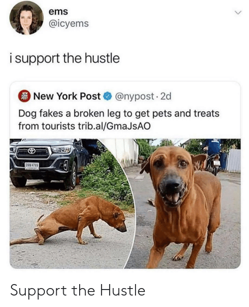 New York Post: ems  @icyems  isupport the hustle  New York Post@nypost. 2d  Dog fakes a broken leg to get pets and treats  from tourists trib.al/GmaJsAO  2 4785 Support the Hustle