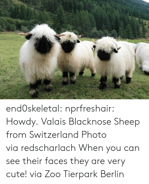 Cute, Target, and Tumblr: end0skeletal:  nprfreshair:  Howdy. Valais Blacknose Sheep from Switzerland Photo via redscharlach  When you can see their faces they are very cute! via Zoo Tierpark Berlin