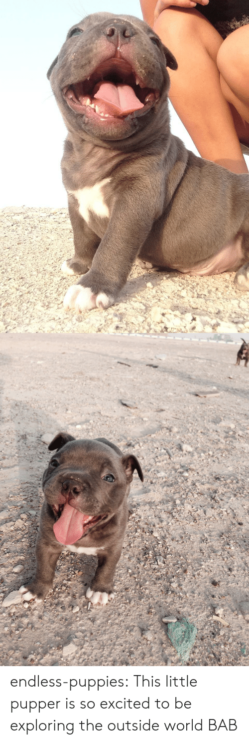 pupper: endless-puppies: This little pupper is so excited to be exploring the outside world  BAB