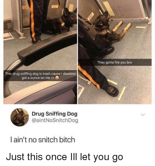 Bitch, Fire, and Snitch: ENIT  They gotta fire you bro  This drug sniffing dog is trash cause I deadass  got a ounce on me rn  Drug Sniffing Dog  @aintNoSnitchDog  l ain't no snitch bitch Just this once Ill let you go