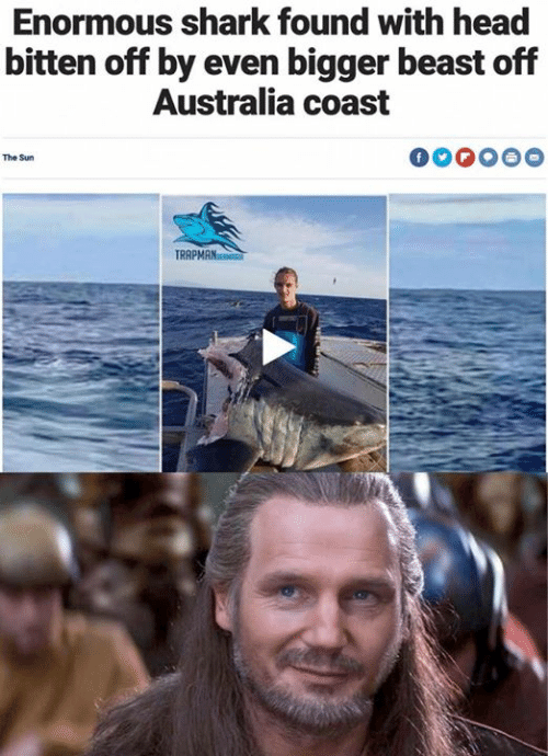 Head, Star Wars, and Shark: Enormous shark found with head  bitten off by even bigger beast off  Australia coast  The Sun  TRR