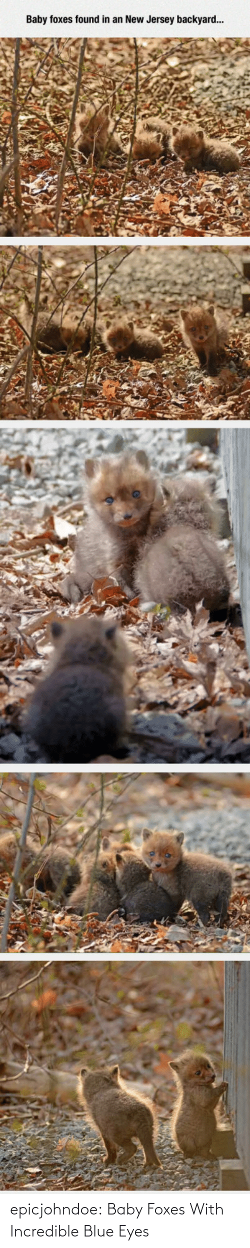 Blue: epicjohndoe:  Baby Foxes With Incredible Blue Eyes
