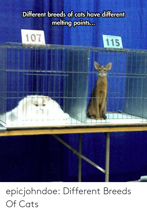 different: epicjohndoe:  Different Breeds Of Cats