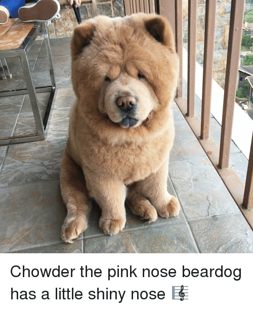 Memes, Chowder, and 🤖: er Chowder the pink nose beardog has a little shiny nose 🎼