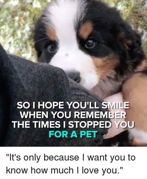 """Love, Memes, and I Love You: er  SO I HOPE YOU'LL SMILE  WHEN YOU REMEMBER  THE TIMES I STOPPED YOU  FOR A PET """"It's only because I want you to know how much I love you."""""""