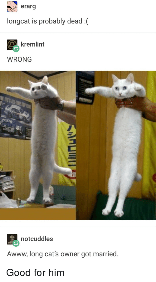 Cats, Good, and Awww: erarg  longcat is probably dead:  kremlint  WRONG  notcuddles  Awww, long cat's owner got married. Good for him