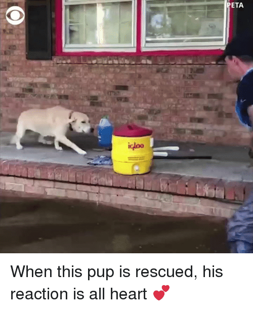 Memes, Heart, and Pup: ETA  IG When this pup is rescued, his reaction is all heart 💕