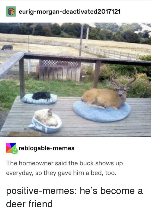 Deer, Memes, and Tumblr: eurig-morgan-deactivated2017121  reblogable-memes  The homeowner said the buck shows up  everyday, so they gave him a bed, too. positive-memes:  he's become a deer friend