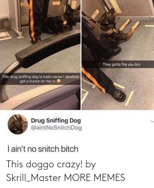 Trash: EUT  EXIT  They gotta fire you bro  This drug sniffing dog is trash cause I deadass  got a ounce on me rn  Drug Sniffing Dog  @aintNoSnitchDog  I ain't no snitch bitch This doggo crazy! by Skrill_Master MORE MEMES